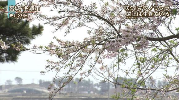 aoyamamegumi_20120508_11.jpg