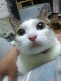 飼育崩壊過程救出猫