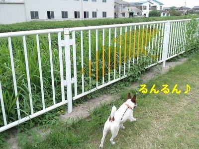 20140919散歩①