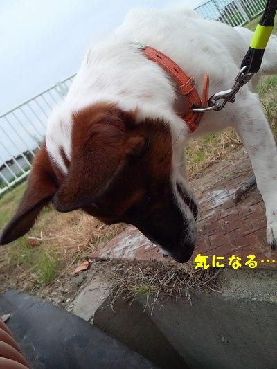 20140919散歩⑥