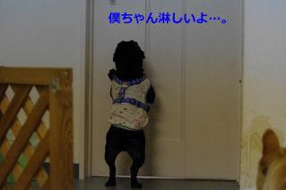 IMGP4223_20120605132328.jpg