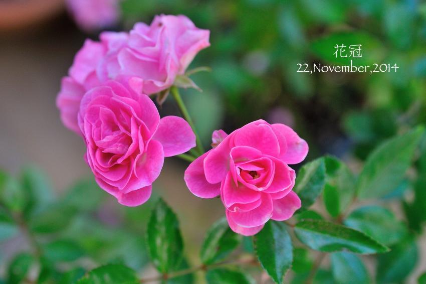 DSC_9453-L_convert_20141126134136.jpg