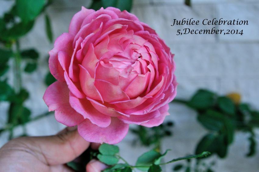 DSC_9693-L_convert_20141205120006.jpg