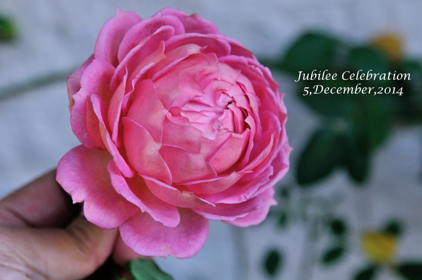 DSC_9695-L_convert_20141205120210.jpg