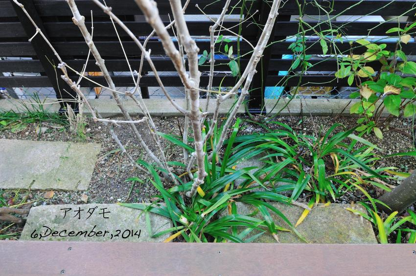 DSC_9759-L_convert_20141217175746.jpg