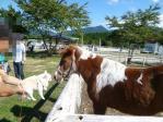 mariaとお馬さん