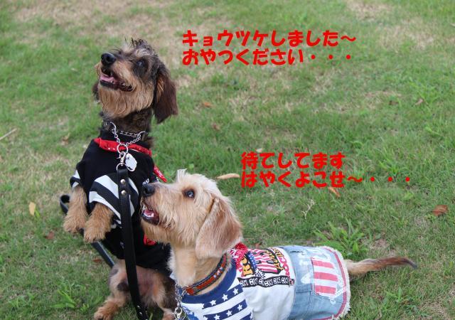IMG_5019_convert_20120910210050.jpg