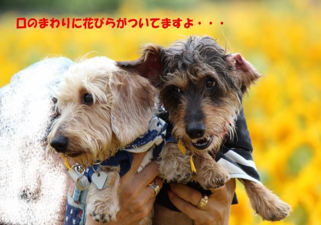 IMG_5052_convert_20120911213411.jpg