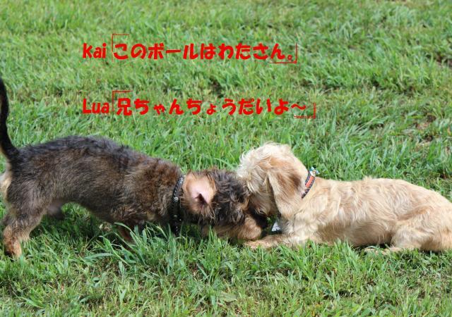 IMG_5317_convert_20120916090729.jpg