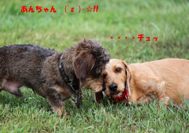 IMG_5382_convert_20120916004934.jpg
