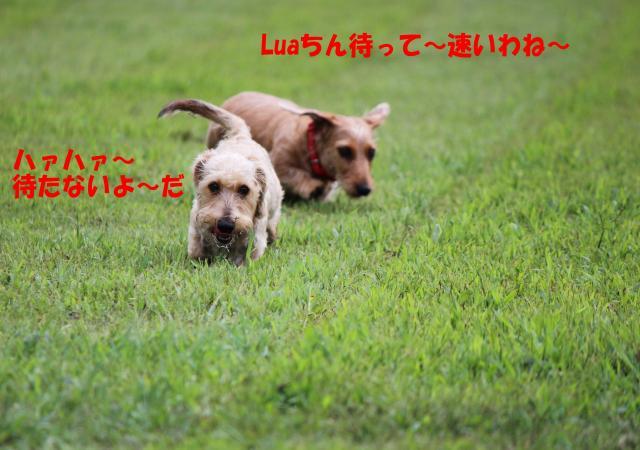 IMG_5414_convert_20120916005406.jpg