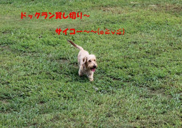 IMG_5438_convert_20120916005708.jpg