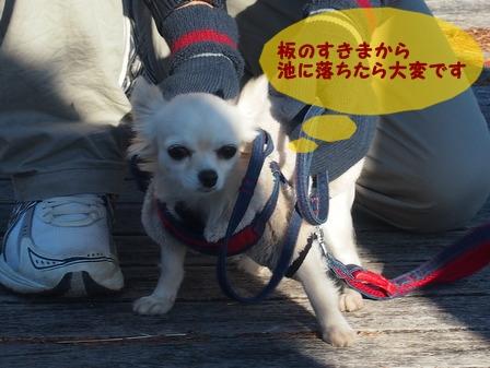 blog1109a.jpg