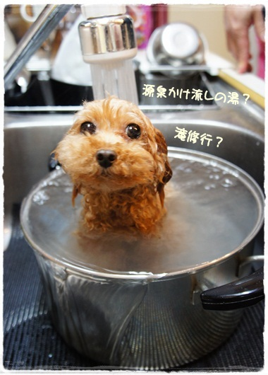 鍋カッププードル?
