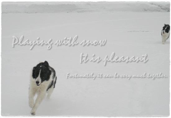 ワンは喜び雪遊び~