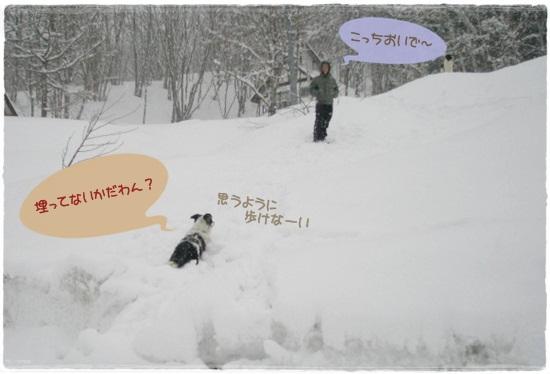 埋まってるよ~((+_+))
