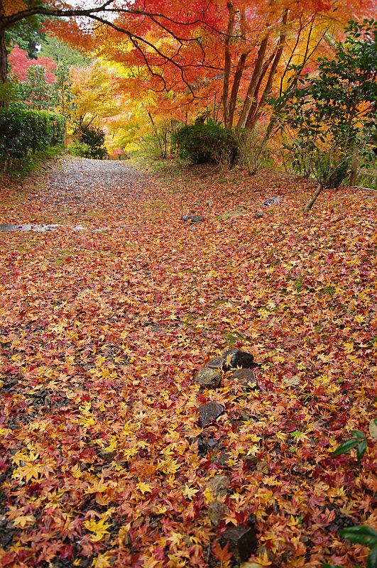 黄橙の絨毯