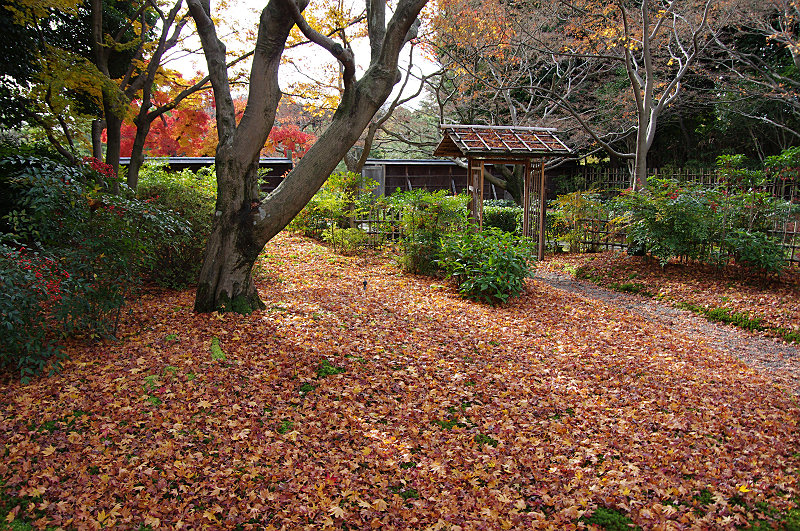 茶室の周りは散り紅葉