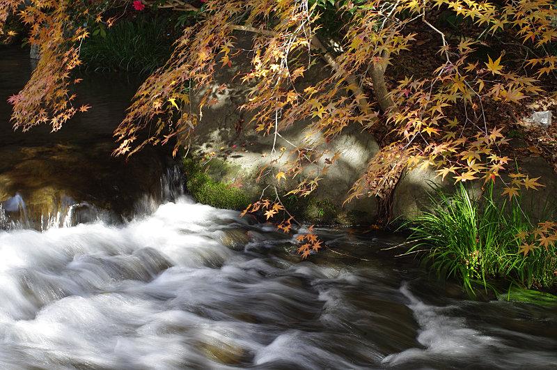 日本庭園、滝からの流れ