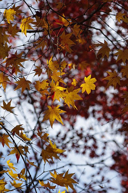 枝にも冬の兆し