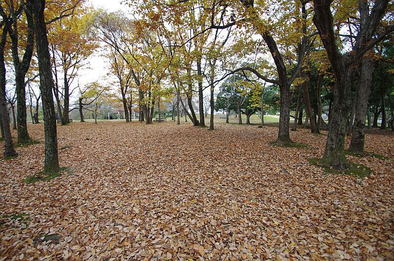 落ち葉が敷きつむ