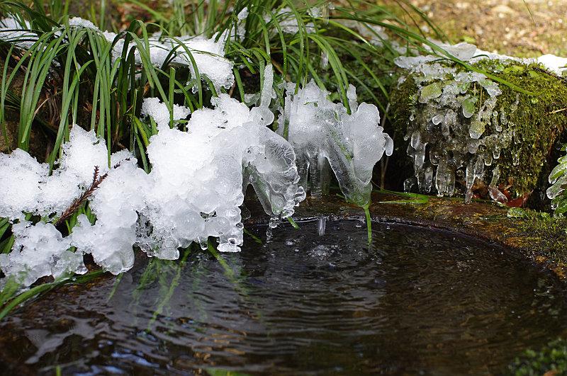 手水鉢も凍って