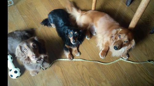ぶ・床の上の三匹