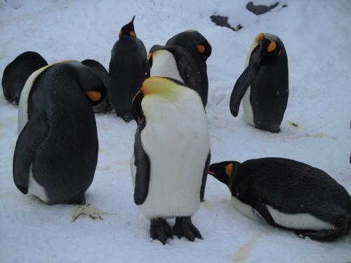 柵の中のペンギン