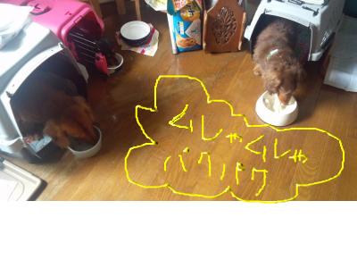 snap_chikomaronmeetan_201270164848.jpg