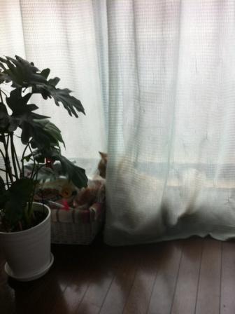 ジャングルだ (1)
