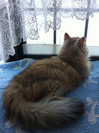 窓際のレオン