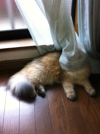 レオンとカーテン (2)