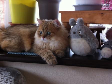 トトロとレオン