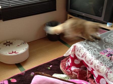 空飛ぶレオン