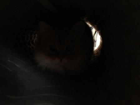 トンネル? (3)