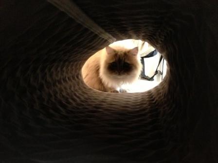 トンネル? (2)