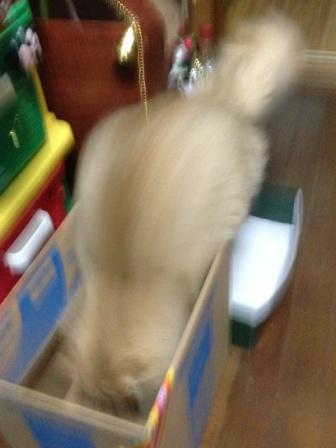 新しい箱? (1)