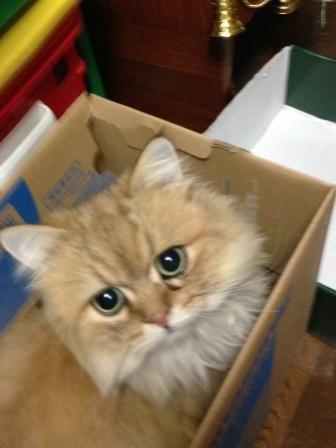 新しい箱? (3)