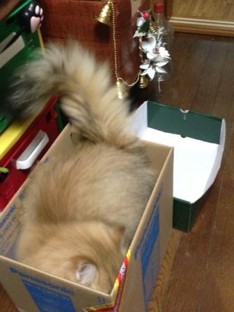 新しい箱? (2)