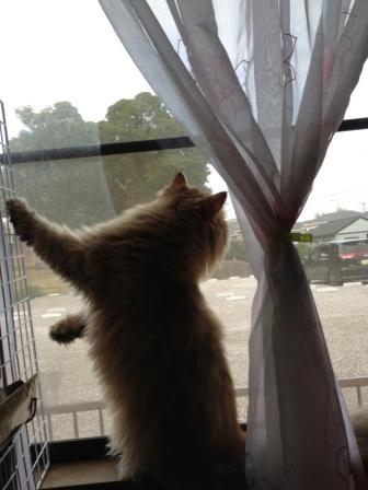 外には何が? (2)