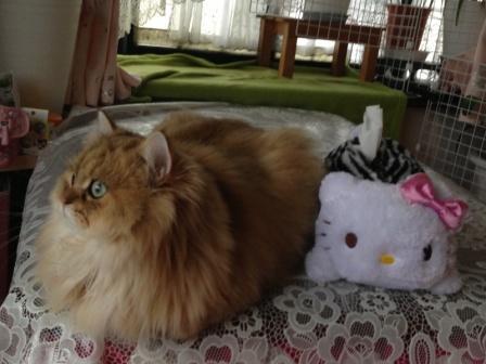 キティちゃんとレオン (1)