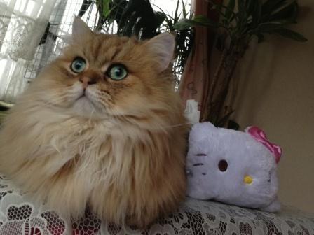 キティちゃんとレオン