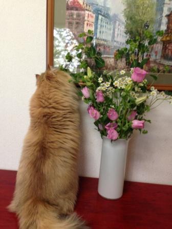 レオンとお花 (3)
