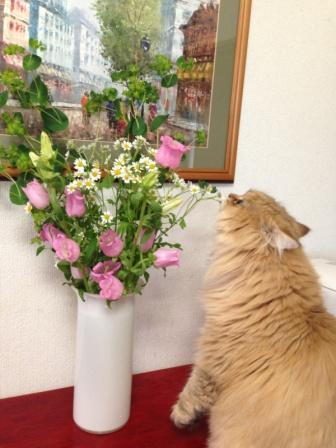 レオンとお花 (1)