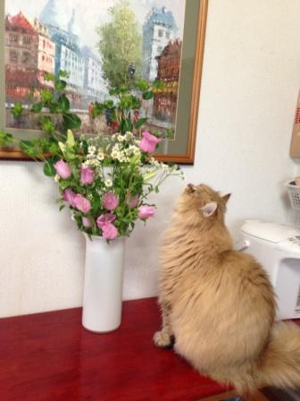 レオンとお花