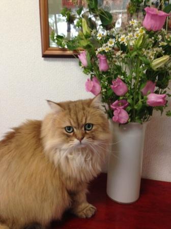 レオンとお花 (5)