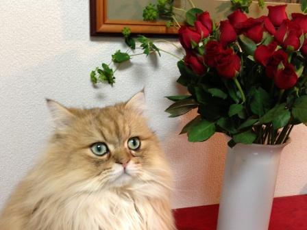 薔薇とレオン (3)