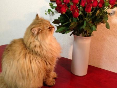 薔薇とレオン (1)