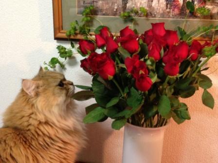 薔薇とレオン