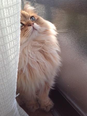 見上げるレオン